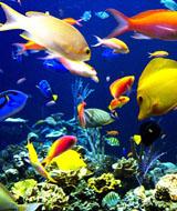 海洋生物展租赁